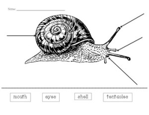 Snail Diagram by Mary Claire French | Teachers Pay Teachers
