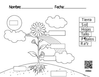 Spanish Parts of a Plant Coloring Page and Song by
