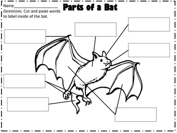 Stellaluna Bat Literacy and Science Unit by For The Love