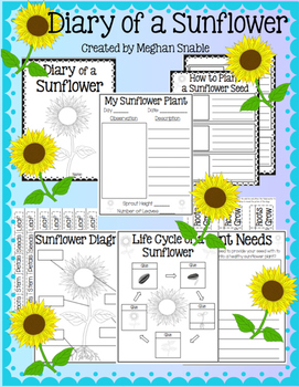 sunflower plant life cycle diagram flat 4 trailer plug wiring freebie by meghan snable teachers pay