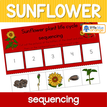 Sunflower Life Cycle Sequencing Activity Worksheet By