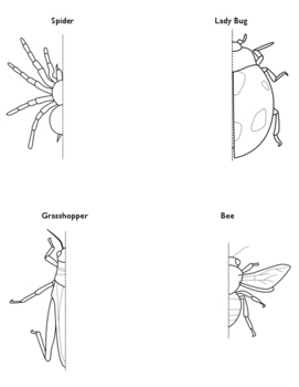Symmetry Worksheet: Insect & Spider Drawing! by