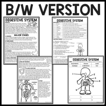 The Digestive System Overview Reading Comprehension and
