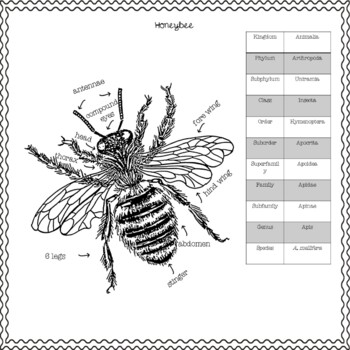 Indispensable Bee Nonfiction Passages and Questions