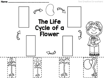 The Life Cycle of a Flower FREEBIE by Two Creative Co