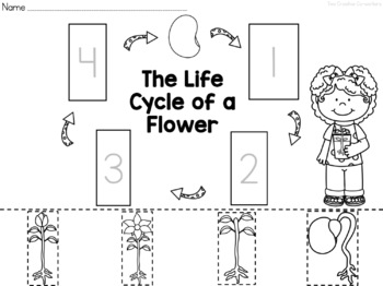 The Life Cycle of a Flower {printable mini book
