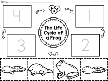 The Life Cycle of a Frog {printable mini book, worksheets