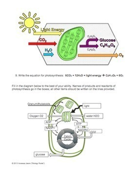 Photosynthesis Reading And Coloring By Biology Roots