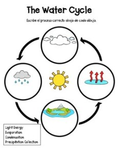 The water cycle graphic organizer also teaching resources teachers pay rh teacherspayteachers