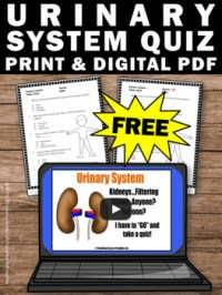FREE Urinary System Worksheet, Human Body Systems Grade 5 ...