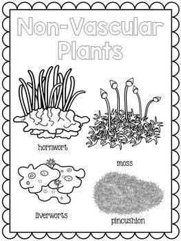 Vascular and Non Vascular Plants Posters by JH Lesson