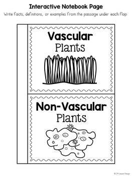 Vascular and Nonvascular Plants Mini-Unit by JH Lesson