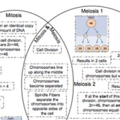 Mitosis And Meiosis Venn Diagram Answers Toyota Audio Wiring By Ruizscience Teachers Pay