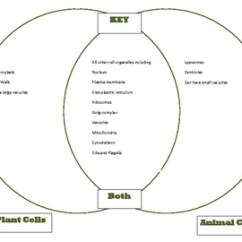 Plant Cell Animal Venn Diagram Er Movie List Cells Comparison Unit Part 1 Key Original 237941 Jpg