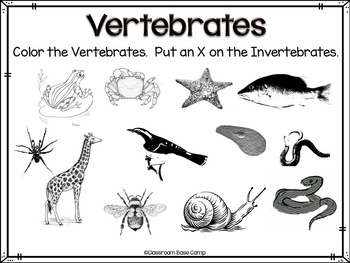 Vertebrates and Invertebrates Unit by Classroom Base Camp