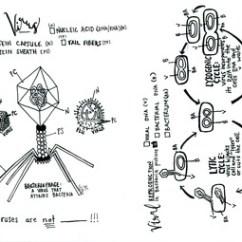 Virus Diagram Worksheet 1997 Dodge Dakota Coil Wiring Coloring Sheet Lysogenic And Lytic Cycle Tpt