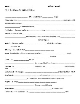Vocabulary Meiosis Worksheet Fill In The Blanks By Mrs