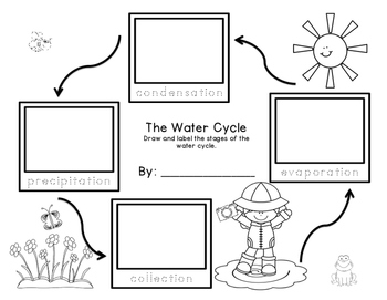 Water Cycle Sequencing Freebie grades K-2 by First Grade