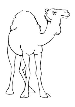 Zoo animals coloring pages full pack! by Adriana
