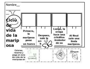 ciclo de vida de la mariposa by Garza's online bilingual