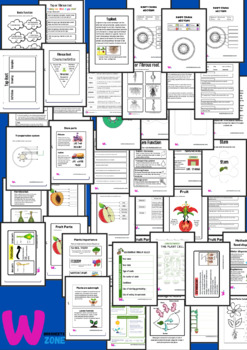 plants unit- plants parts and functions-all about plants