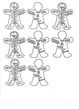 Human Body 11 Organ Systems Foldable by Megan Escobar