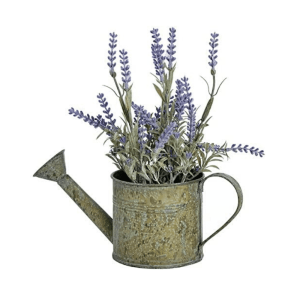 Lavender in watering can planter