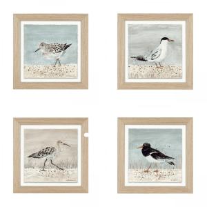 Seabirds set of 4, sea forager, oyster catcher, beach comber, shore drifter