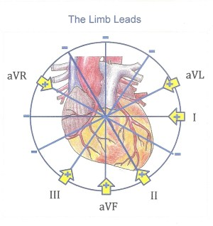 Limb Leads | ECG Guru  Instructor Resources
