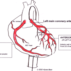 Heart Diagram Coronary Sinus Three Way Switch Circuit Arteries Labeled Ecg Guru Instructor Resources