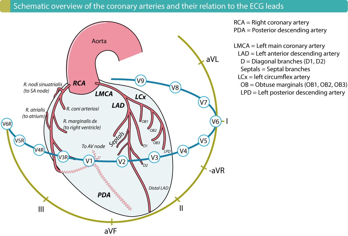 coronary arteries diagram branches verizon fios wiring the left ventricle in myocardial ischemia and infarction
