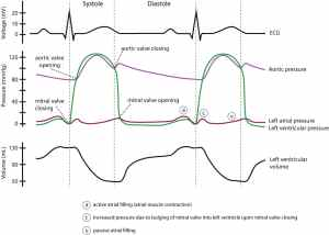 Clinical electrocardiography and ECG interpretation – ECG learning