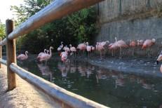 Zoologico Metropolitano