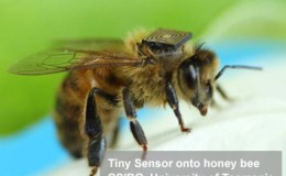 Hitachi USPT on Honeybee