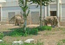 zoo_w_pekinie_13