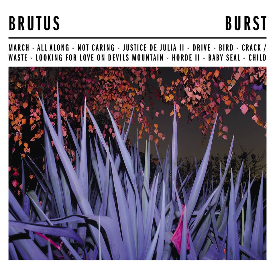 Image result for burst brutus