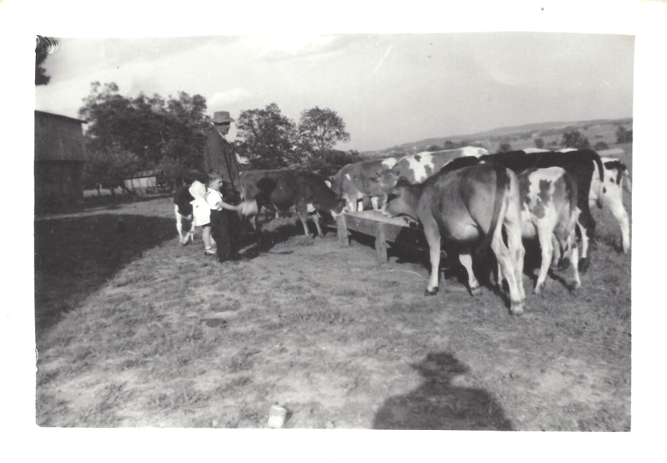 Jerry (son of William) with niece and nephew, Shirley and Bud (Marion Stewart Morgan) with the cows