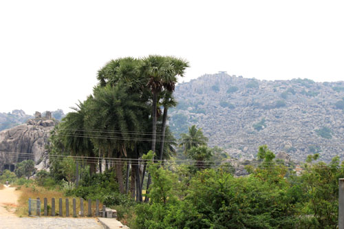 near the slopes of ArunachalaIMG_6402 2