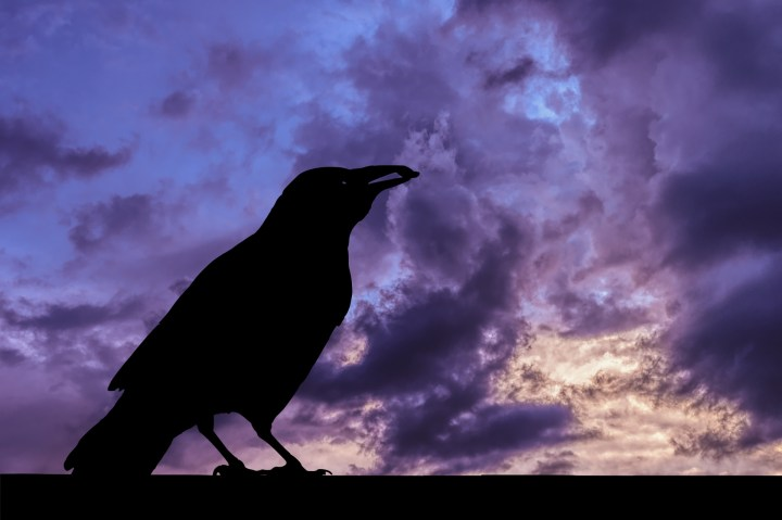 raven-silhouette-and-storm-clouds public domain pictures.net