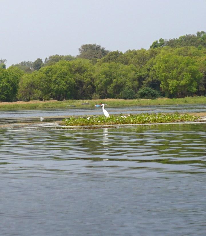 River in Karnataka, IndiaDSC01419