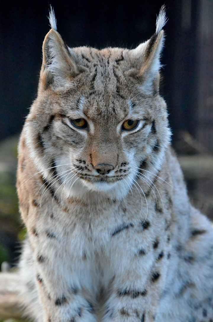 animal big fur zoo