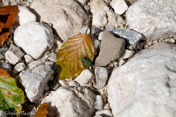 bug-on-the-rocks