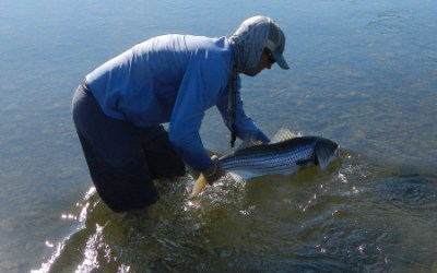 """California Stripers: Opinion is as Good as Fact"" – by Hogan Brown"