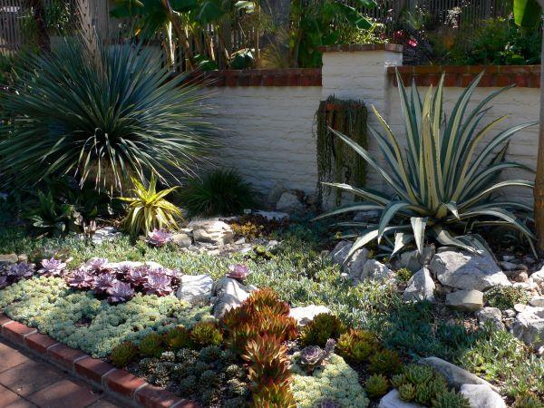 cactus & succulent garden sherman