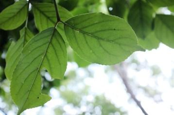 青綠的葉子