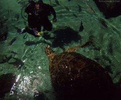 https://echopen.files.wordpress.com/2017/04/0010_baltimore-inner-harbor-aq-echopen.jpg