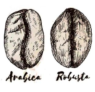 Quelle est la différence entre l'Arabica et le Robusta ?