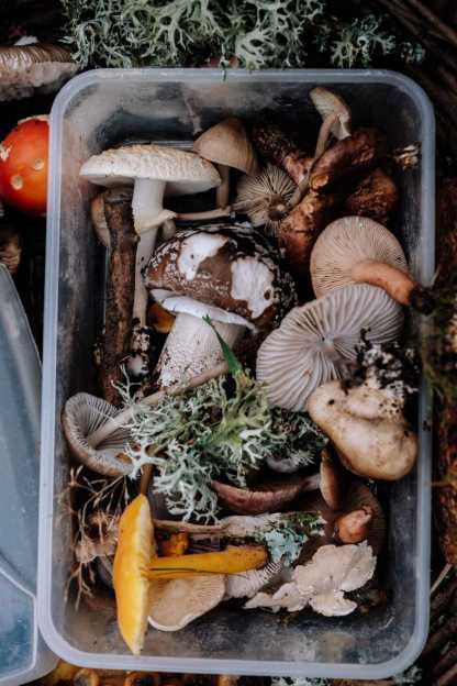 L'échoppe Végétale - Inspirations pour un automne pas monotone | les légumes d'automne comme les champignons des bois cueillie dans la forêt sont de saison