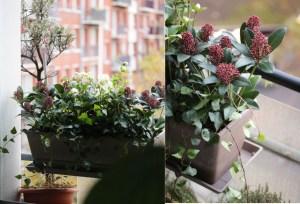 jardiniere de plantes vendue en ligne