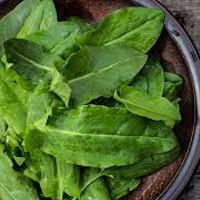 oseille, graines bios , jardinerie potager de balcon, échoppe végétale